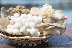 Variety of fresh mushrooms in a basket Stock Images