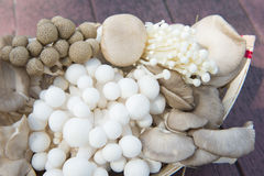Variety of fresh mushrooms in a basket Royalty Free Stock Images