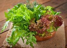 Variety fresh organic herbs Stock Image