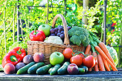 Variety of fresh organic vegetables and fruits in the garden Royalty Free Stock Photography