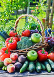 Variety of fresh organic vegetables and fruits in the garden Royalty Free Stock Photos