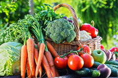 Variety of fresh organic vegetables and fruits in the garden. Balanced diet Royalty Free Stock Images