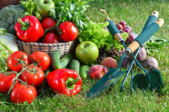 Variety of fresh organic vegetables and fruits in the garden Stock Image