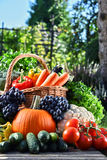 Variety of fresh organic vegetables and fruits in the garden Stock Images