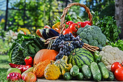 Variety of fresh organic vegetables and fruits in the garden. Balanced diet Stock Image
