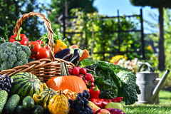 Variety of fresh organic vegetables and fruits in the garden Royalty Free Stock Photo