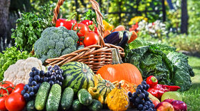 Variety of fresh organic vegetables and fruits in the garden stock photos