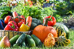 Variety of fresh organic vegetables and fruits in the garden. Balanced diet Royalty Free Stock Photography