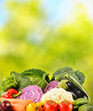 Variety of fresh organic vegetables in the garden Stock Image