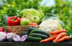 Variety of fresh organic vegetables in the garden Stock Photography