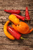 Variety of fresh peppers or capsicum Royalty Free Stock Photography