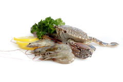Variety of Fresh Sea Food. In white background Royalty Free Stock Photography
