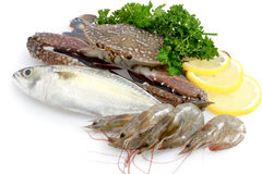 Variety of Fresh Sea Food. In white background Stock Photography