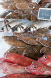 Variety of fresh seafish on ice Royalty Free Stock Photos