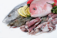 Variety of Fresh Seafood. Fresh Sea Food (mackerel, red snapper, shrimp and squid Royalty Free Stock Photos