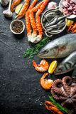 Variety of fresh seafood. On black rustic background royalty free stock image