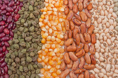 Variety of fresh seeds Stock Photography