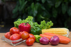 Variety of fresh vegetables on wood table. Tomatoes on dish and lettuce, corn, carrot, onion and green paprika on wood table Royalty Free Stock Photo