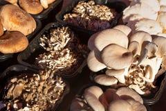 Variety of freshly foraged mushrooms