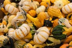 A variety of freshly picked ripe squash Stock Photo