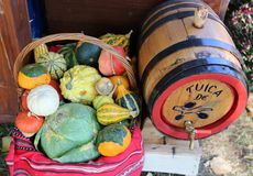 Variety of gourd in a basket royalty free stock photo