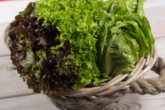 Variety of green and red, roma fresh lettuce salad leaves  Stock Photography