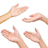 Variety of hands in different poses Royalty Free Stock Image