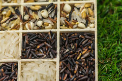 Variety of healthy grains and seeds in a wooden box mostly gluten free with rice. Sensitive Focus stock photos