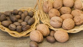 Variety of pecan nuts and others. Variety of healthy nuts on rustic background Stock Images
