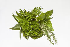 Variety of herbs Royalty Free Stock Photography