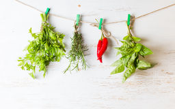 Variety herbs hanging on white background rosemary chili parsley basil stock photos