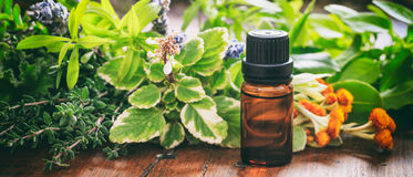 Variety of herbs and oil on wooden background Royalty Free Stock Photos