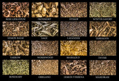 Variety of herbs stock images