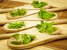 Variety of herbs on wooden spoons Royalty Free Stock Image