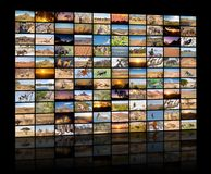 A variety of images of African Landscapes and Animals as a big image wall. Documentary channel stock photo