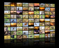 A variety of images of Botswana as a big image wall, documentary channel royalty free stock image