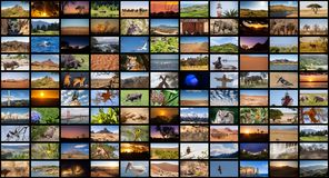 A variety of images of Landscapes and Animals as a big image wall, documentary channel.  stock images