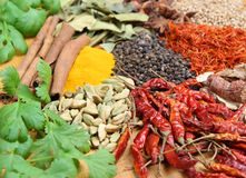 Variety of Indian Curry Spices. Variety of Indian curry ingredients. Shallow DoF Stock Images