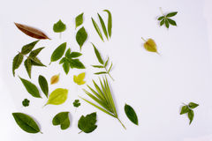 Variety of leaves Stock Photography