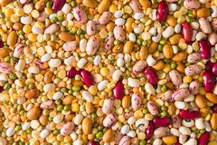 Variety of legumes. Variety of colored legumes to make soup Royalty Free Stock Photo