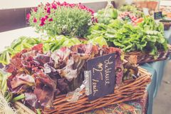 Variety of lettuce for sale in baskets at the farmer`s market for fall harvest royalty free stock image