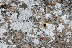 Variety of lichens Stock Image