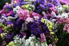 Variety of limonium sinuatum or statice salem flowers in blue, lilac, violet, pink, white, yellow colors in the greek garden shop. Horizontal. Close-up Royalty Free Stock Image