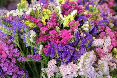 Variety of limonium sinuatum or statice salem flowers in blue, lilac, violet, pink, white, yellow colors in the greek garden shop. Horizontal. Close-up Stock Images