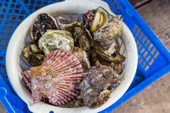 Variety of live oysters and shellfish for grill Royalty Free Stock Images