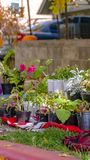 Variety of lush potted plants and flowers at the garden of a home. Vertical Variety of lush potted plants and flowers at the garden of a home. Bright sunlight stock photography