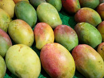 Variety of mangoes in india Stock Images
