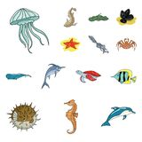 A variety of marine animals cartoon icons in set collection for design. Fish and shellfish vector symbol stock web. A variety of marine animals cartoon icons in Stock Image
