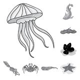 A variety of marine animals monochrome icons in set collection for design. Fish and shellfish vector symbol stock web. A variety of marine animals monochrome Stock Images