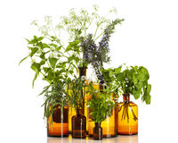 Variety of medicinal herbs in apothecary bottles isolated Royalty Free Stock Photo